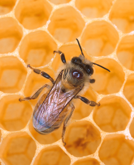 To bee or not to bee...the work of the busy bee is under threat